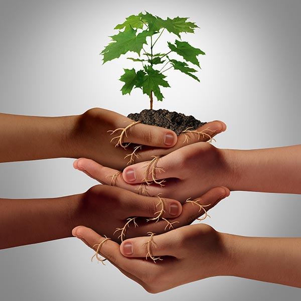 Ein kleines Bäumchen mit Erde und Wurzeln. Der Wurzelballen wird von 4 Händen getragen, die sich gegenseitig unterstützen.